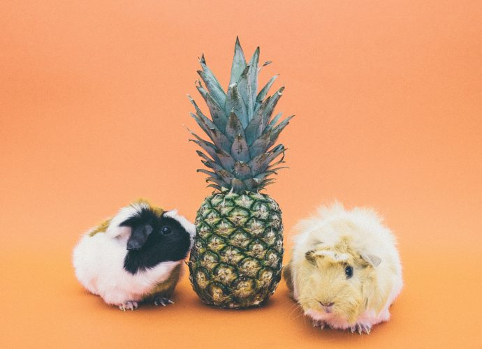 Pineapple and animals